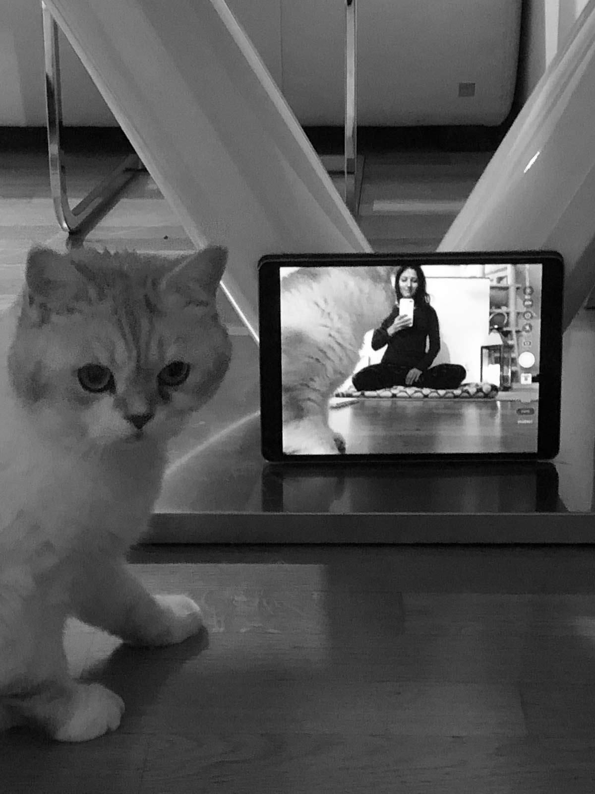 Laptop, der Person und eine Katze beim Online Yoga